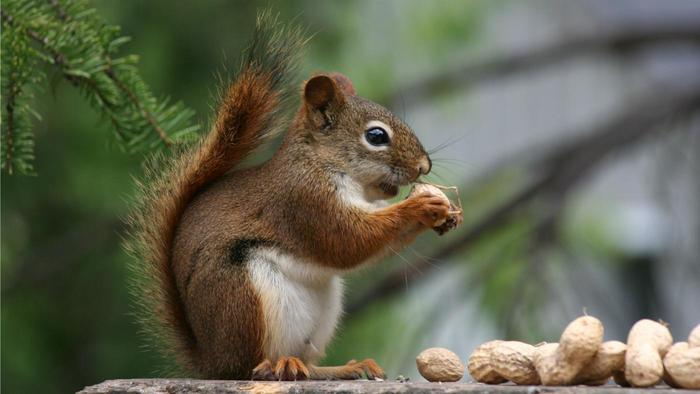 Don't worry its not your nuts or KP's he is after