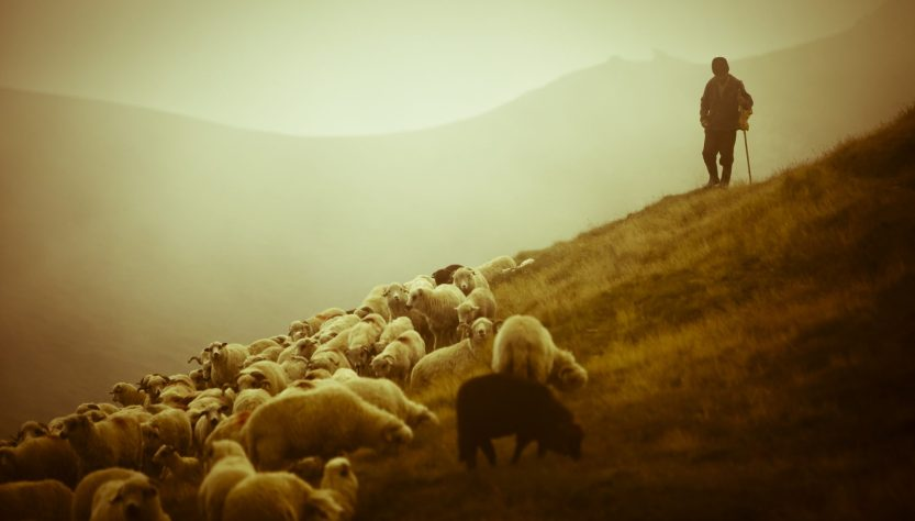 Shepherds protect their flock.