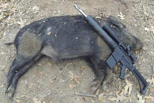 45 Raptor hunting