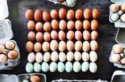 Eataly yumurta yemekleri atölyesi