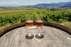 Trakya Bağ Rotası Şarap ve Gastronomi Gezisi