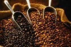 Opus Noesis'te Dünden Bugüne Kahve