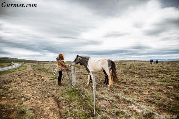 İzlanda Gezi Yazısı, izlanda atları