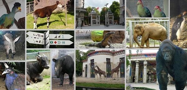 Anvers-Antwerp-Hayvanat-Bahcesi-nerede-nasil-gidilir-ne-yapilir-ne-alinir-ne-yenir-belcika-zooinstitutescom