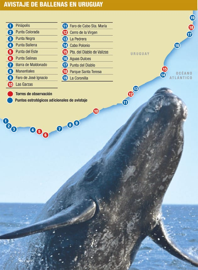 Map of Whale watching in Uruguay