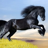 Mejoramiento genético de equinos