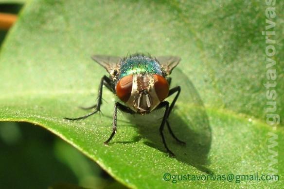 La mosca me mira