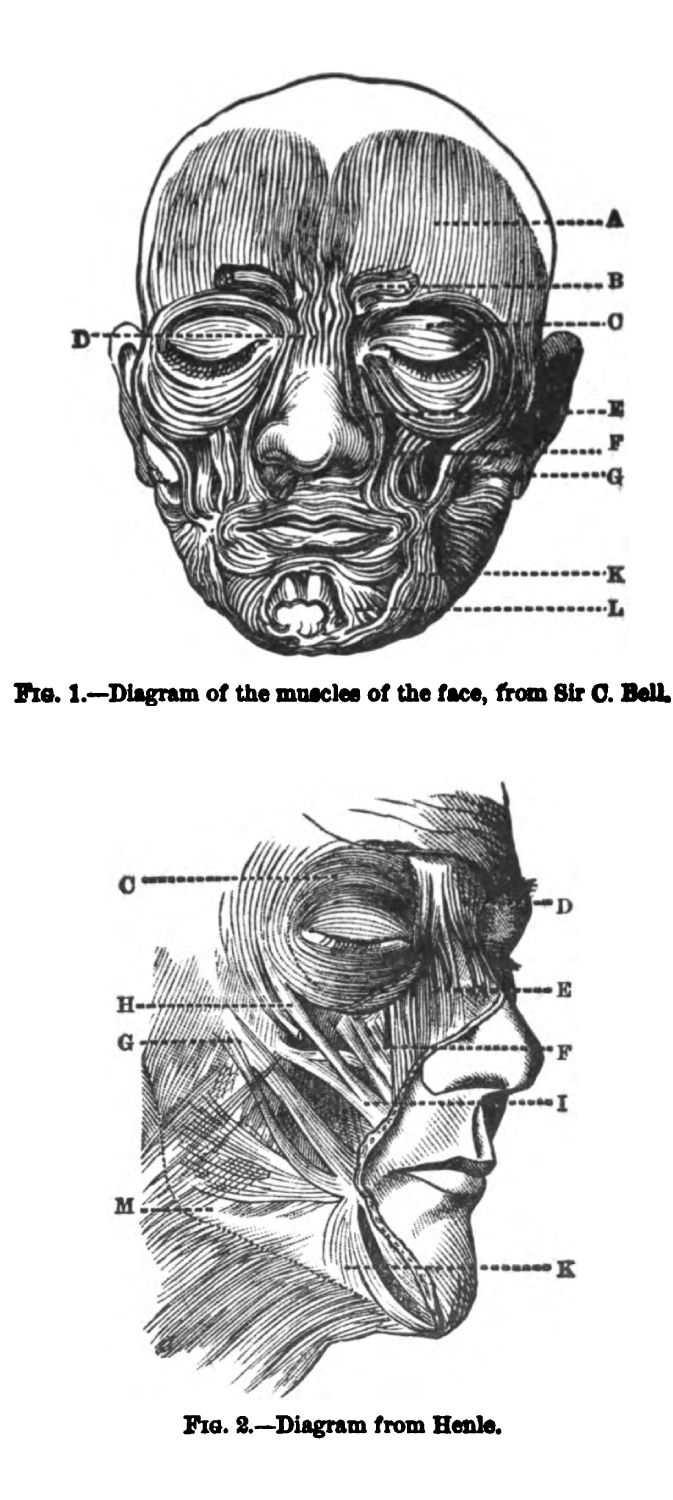 Muscles of the Human Face. Fig 1-2
