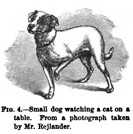 Small Dog Watching a Cat on A Table. Figure 4