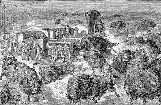 Buffalo are rounded up and slaughterd from a train.
