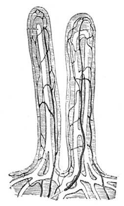 villi containing lacteals