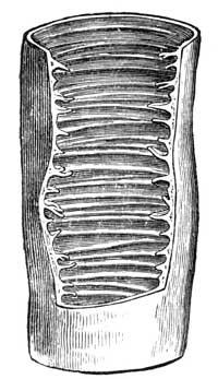 Interior of small intestine.