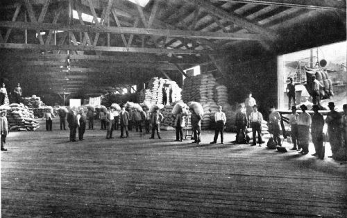 Unloading Coffee at One of the Covered Piers of the New York Dock Company