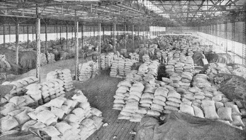 Showing How Coffee Is Stored Under Steel-Covered Sheds at New Orleans