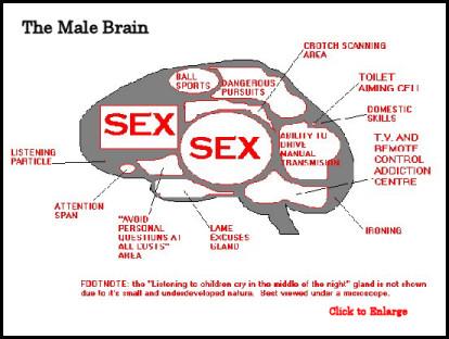 Male Brain - Funny bits