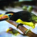 Animals of Guyana