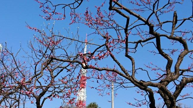 Sakura and Tokyo Tower