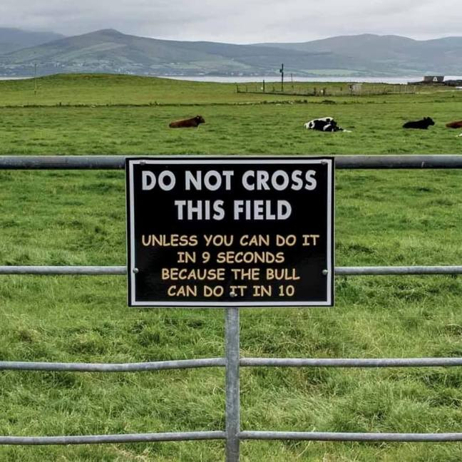 Bull warning sign on fence in front of field