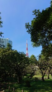 Tokyo tower rising over trees in park