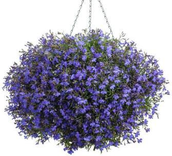 astıma iyi gelen bitkiler