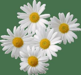 strese iyi gelen bitkiler