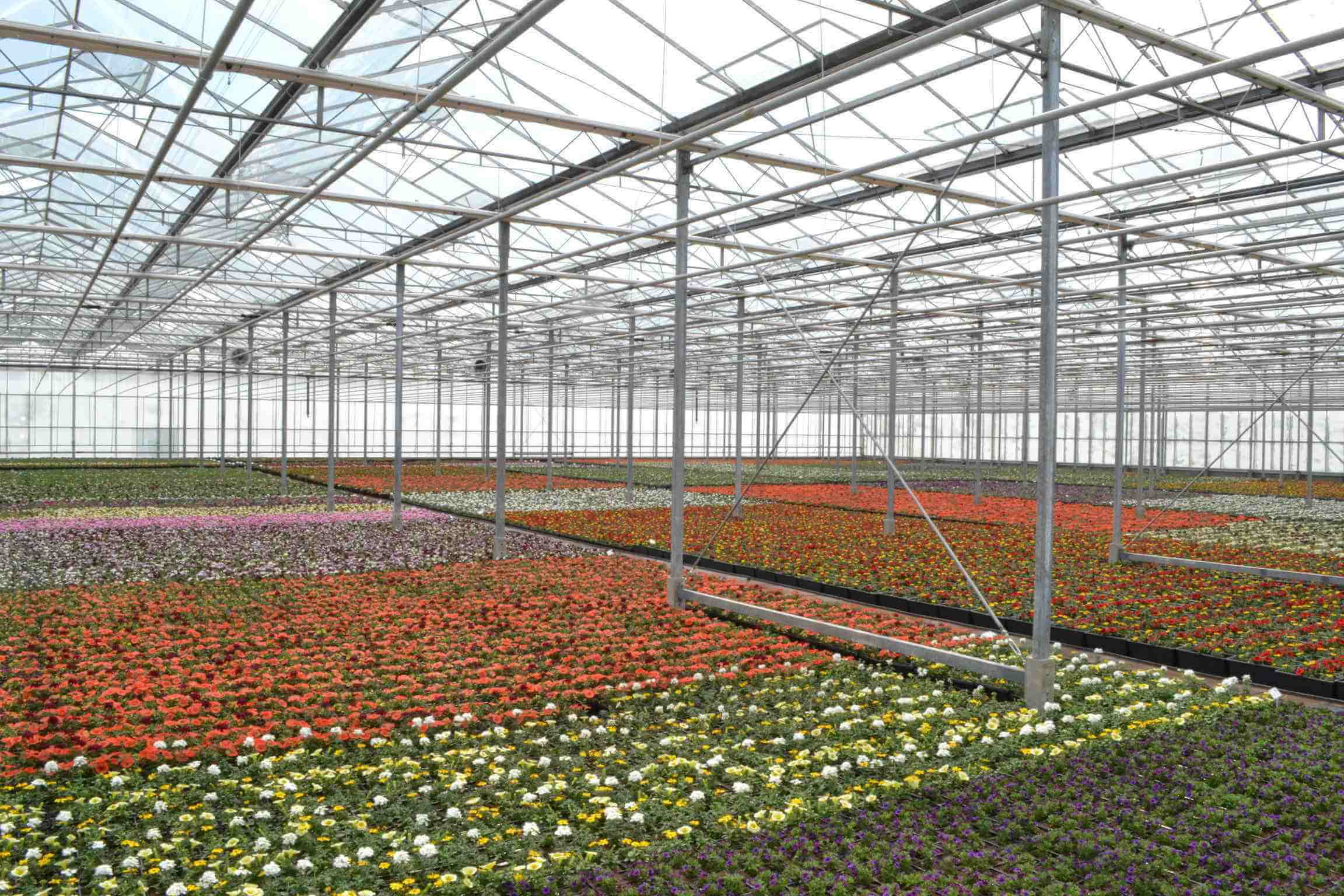 Glasshouse Interior w/flowers