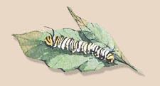 Aworm