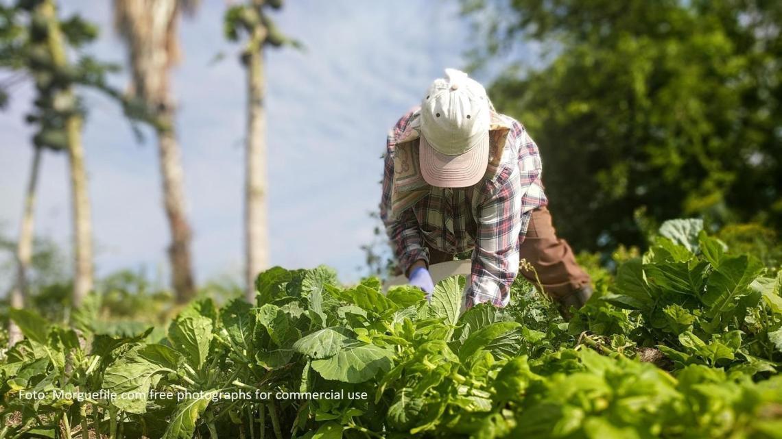 Rilanciata la cambiale per gli agricoltori, i dettagli - Gwendalina.tv