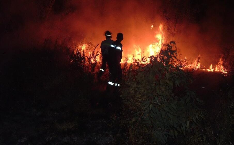 Aquara, fiamme all'uliveto del sindaco - Gwendalina.tv