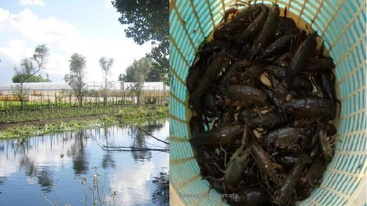 Inquinamento e fiume Sarno: tornano i gamberi nelle acque - Gwendalina.tv