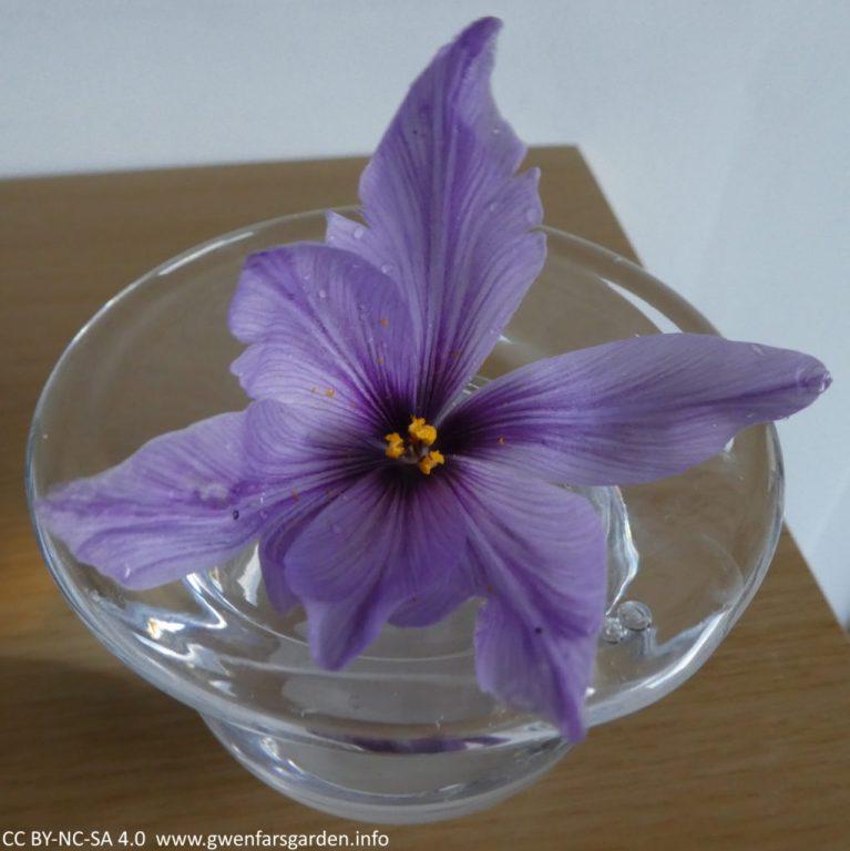 Die verbleibende Blume, abzüglich der roten Narben, in einer klaren Glasvase auf einem Holzregal.