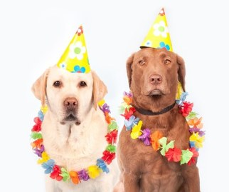 dogs with birthday caps