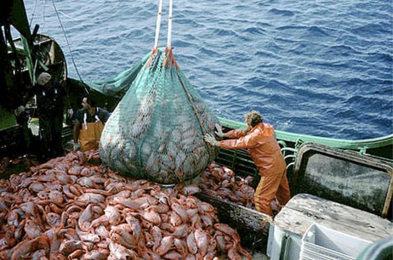 Pesca del tonno rosso, il ricorso dei pescatori cilentani sul tavolo del Tar del Lazio