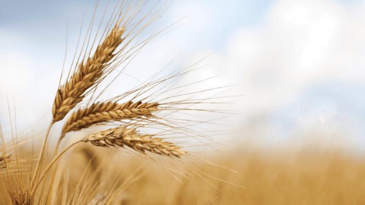 Caselle in Pittari, successo per il palio del grano