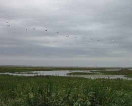 Photo: Danube Delta near Constanta, Romania. Credit: Lisa Borre.