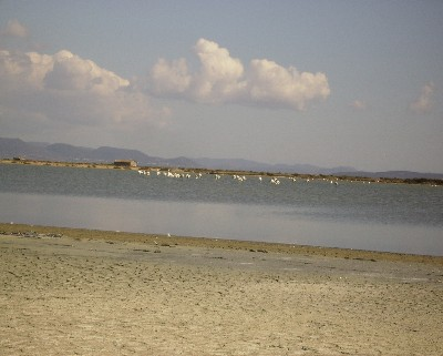 Photo: Flamingos near Sant Antioco, Sardinia. Credit: Lisa Borre.