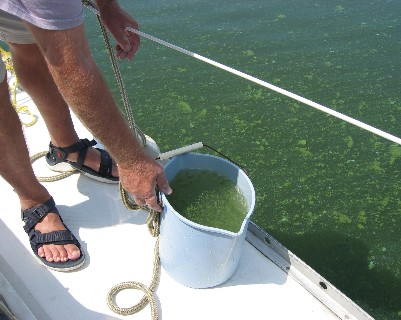 Photo: Algae bloom on Lake Oneida, NY. Credit: Lisa Borre.