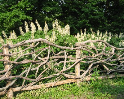 Photo: Twig fence, Olana Castle, NY. Credit: L. Borre.