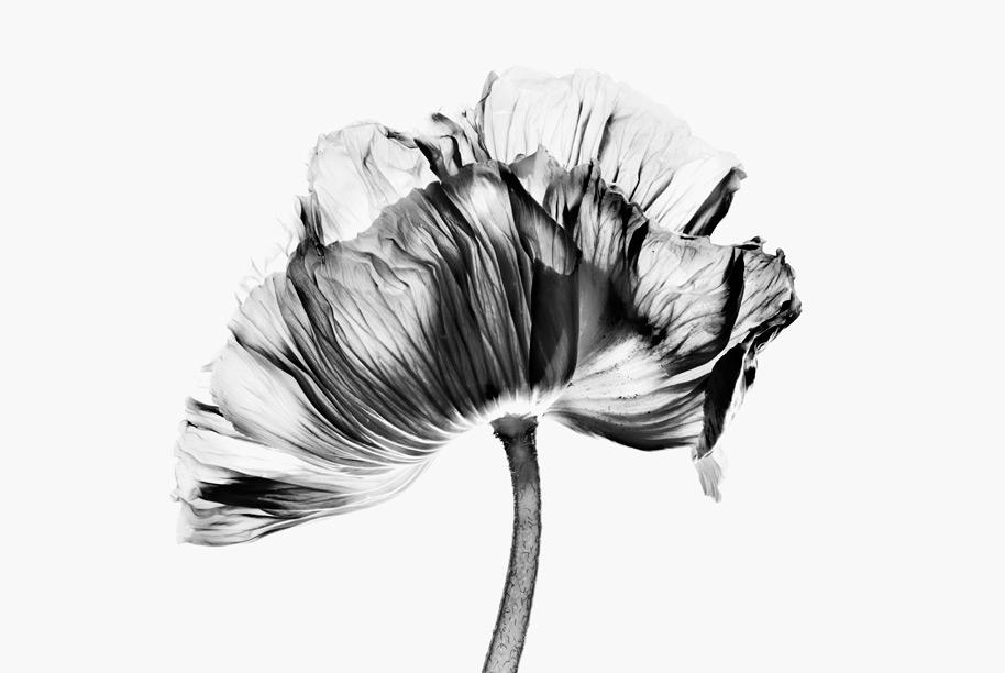Blomrum