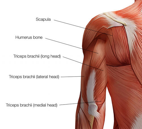 träna triceps övningar