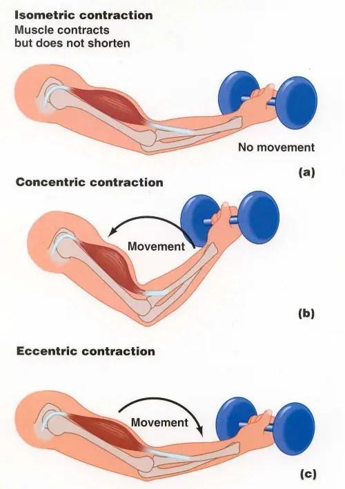 excentrisk koncentrisk träning