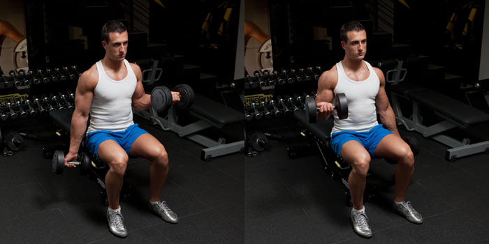 Seated Dumbbell Biceps Curls Gympaws 174