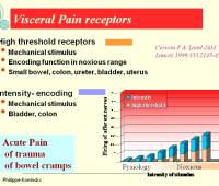 gynecology pelvic pain images endometriosis retroversion appendix pelvic congestion syndrome