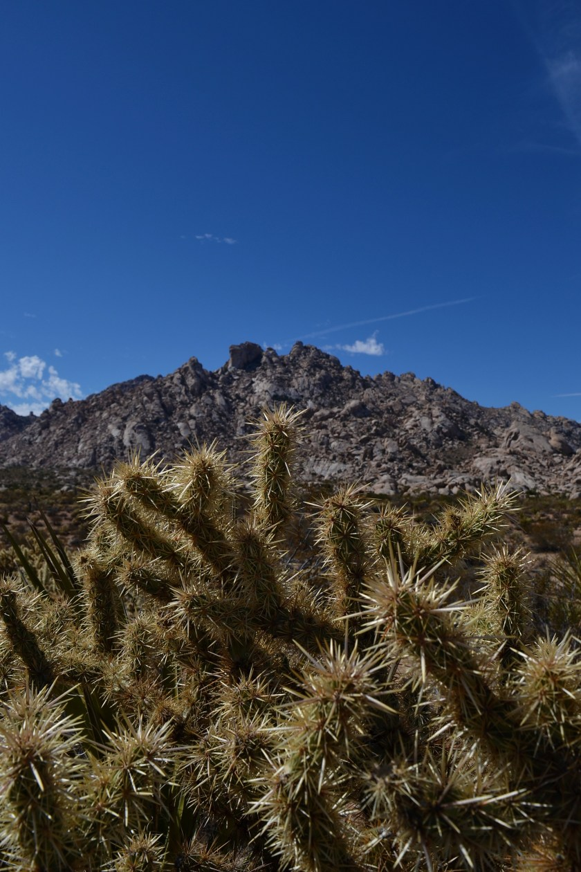 5-mojave-desert-cactus