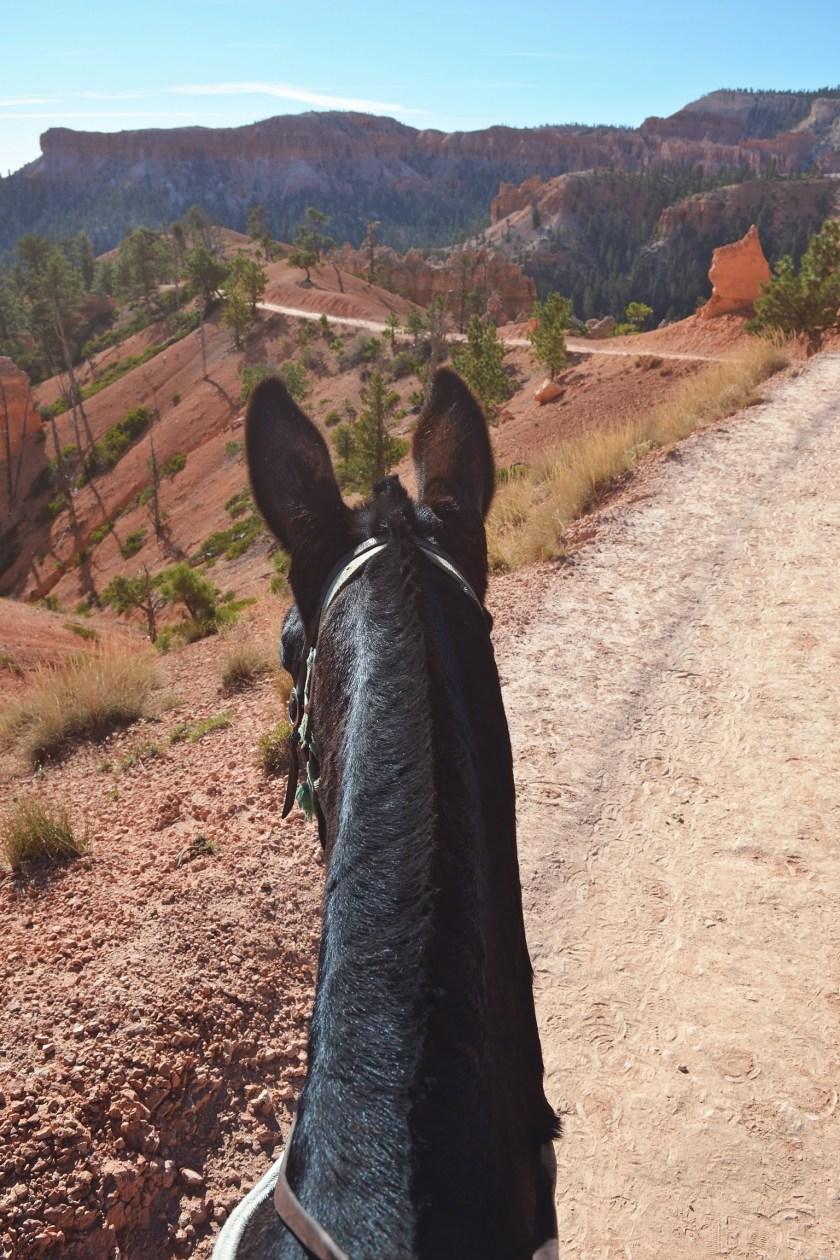 bryce-canyon-trail-riding-1