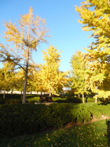 fall on the plaza at the Nelson Atkins museum