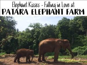 Patara Elephant Farm cover photo