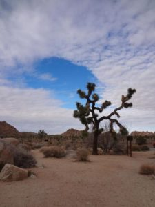 Joshua Tree National Park, California Weekend Getaway