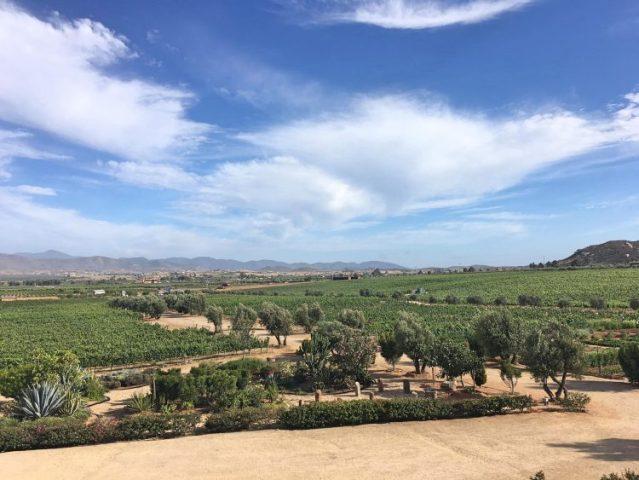 view from finca la carodilla