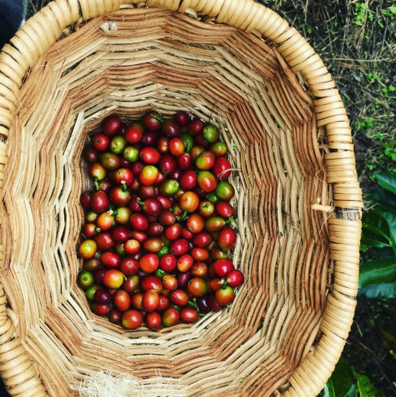 coffee basket salento